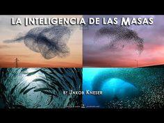 LA INTELIGENCIA DE LAS MASAS - (Documental)