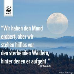 """Zitat zum Sonntag: """"Wir haben den Mond erobert, aber wir stehen hilflos vor den sterbenden Wäldern, hinter denen er aufgeht."""" (H. Weinzierl)"""