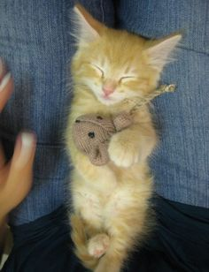 Kitty sleeps with mouse woobie.