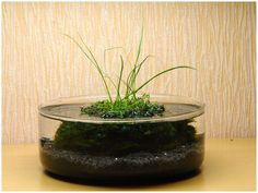 f16 1/6s ISO160 DSC-R1 57.4 ? ? Turtle Terrarium, Moss Terrarium, Terrarium Plants, Garden Plants, Plants In Jars, Mini Plants, Water Plants, Container Plants, Painting Glass Jars