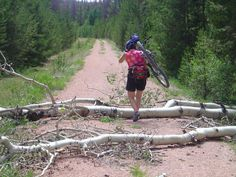 Traversing windfallen aspen trees on the Medicine Bow Trail in Wyoming
