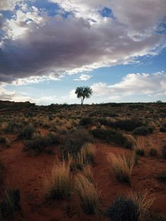 #cloudporn #red #sand #desert #clouds #arizona #sandstone #lone #tree