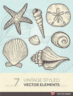 Vintage Beach and Ocean Seashells Vector Elements  #GraphicRiver        Vintage B