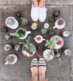 Succulent Display, Succulent Care, Succulent Arrangements, Succulents Garden, Cactus Y Suculentas, Cactus Plants, Instagram, Inspiration, Mini Cactus