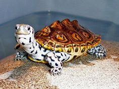 Turtle with beautiful markings