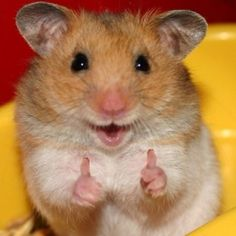 """""""Yeah! I saw you trip over the cat! I give it a 9.5. I would have given it a ten, but the cat is still alive."""" - Happy Hamster"""