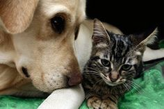 Introducing your Dog to a New Cat
