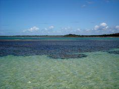 Coral reef -  Boipeba Island - Bahia