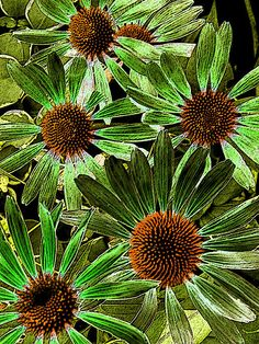 Green and Orange Daisies Fine Art Print by Mary Sedivy.