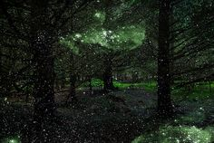 Mystical Photos of Illuminated Forests in the UK by Ellie Davies - My Modern Met