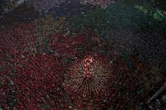 Members of the Castellers Joves Xiquets de Valls try to complete their human tower during the 25th Human Tower Competition in Tarragona, Spain on Oct. 5.