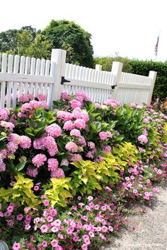 Moss Mountain Farm Flower Tour - Southern Hospitality ~ a sea of lovely pink hydrangeas and underplanted with pink impatiens or petunias.