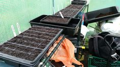 Sowed some salads and hardy annual flowers today. What else to do when unwell and rainy. #allotment #gardenchat
