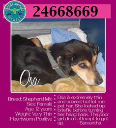 OSA IS IN NEED OF SOME TLC AND A FOSTER/ADOPTER/RESCUE ASAP! OSA IS AT FORT WORTH ANIMAL CARE AND CONTROL, 4900 Martin Street, Fort Worth, TX  (817) 392-1234