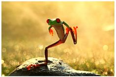 """""""Dancing Frog"""" - Indonesia, Riau Islands, Batam City: Photography By: Shikheigoh - [http://www.gettyimages.com]"""