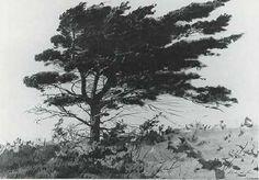 Andrew Wyeth - Study of Pine, Maine /1937