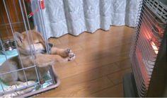 日本の柴犬が一生懸命ヒーターで肉球を暖めようとしてる写真が話題に→海外「可愛すぎる!」|海外まとめネット | 海外の反応まとめブログ
