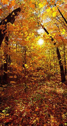 """An Autumn Walk Photograph""  by Phil Koch, WI"