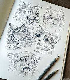 "akreon on Twitter: ""#InternationalCatDay 🐾… "" Animal Sketches, Drawing Sketches, Drawing Ideas, Drawing Tips, Cat Drawing Tutorial, Drawing Techniques, Sketching, Arte Sketchbook, Cat Art"