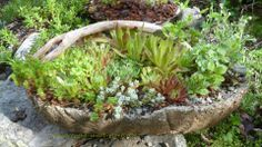 Twigs and hypertufa - the perfect combination.  Find out more about the Rustic and Succulents e-course and make your own...