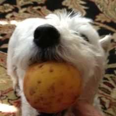 Nola has decided that fresh picked peaches are the new toys.