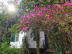 Museu do Açúde - Alto da Boa Vista - Castro Maia - Floresta da Tijuca - Casinha - Mansão - Rio de Janeiro - Brasil