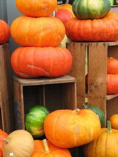 Pumpkins and gourd v