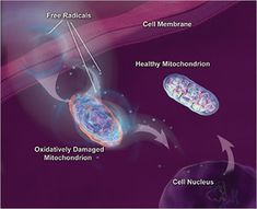 Mitochondrial Dysfunction – A Biomarker for Fibromyalgia and ME/CFS?   • ProHealth.com • June 5, 2013