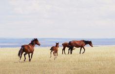 """johnandwolf: """"Wild horses on the Laramie Plains, WY / July 2013 """""""