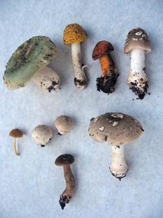 I want to learn mushroom foraging this year.