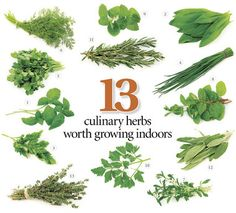 13 herbs to grow in your kitchen