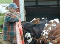 Starting your own dairy farm
