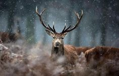 i saw one like him on my elk hunt...i was so sad i did not have a deer tag.  beautiful.