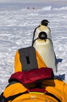 After taking two Antarctica cruises (Quark & Lindblad Expeditions), I have compiled my 20 Best Antarctica photography tips to help first timers take amazing images. This guide includes my top tips for epic & unique photos. | Travel Photography | Penguins | Nature | Animals | Bucket List | Landscapes | Tips and Tricks | Travel | Emperor Penguin |  Travel Destinations | Travel Tips | Adventure Travel | Travel Packing | Wanderlust  #wildlife #photography #penguins #babyanimals Travel Packing, Travel Tips, Travel Destinations, Travel Blog, Photography Guide, Wildlife Photography, Travel Photography, March Of The Penguins, Antarctica Cruise