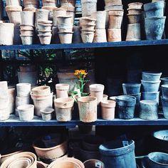 A gardener's ode to terracotta, via Instagram dina_av.