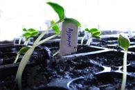 Καλλιέργεια Αγγουριάς Plants, Plant, Planets