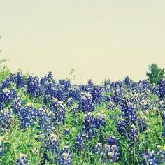 Texas The Outsiders, Texas, Plants, Plant, Texas Travel, Planets