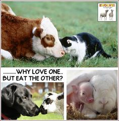 There is NO difference ALL life is precious. #EndSpeciesism choose #Cruelty-Free #GoVegan EM-C