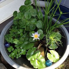 Stunning Water Features You Can Make In A Day - Container Water Gardens Small Water Gardens, Container Water Gardens, Indoor Water Garden, Container Gardening, Pond Design, Garden Landscape Design, Landscape Plans, Patio Pond, Ponds Backyard