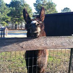 #donkey #eagala