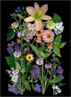 - Scanner Photography By Ellen Hoverkamp Amazing Flowers, Love Flowers, Botanical Illustration, Botanical Prints, Woodland Flowers, Mosaic Projects, Create And Craft, Ikebana, Flower Designs