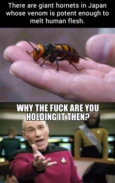 There are giant hornets in Japan...