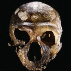 New research says Neanderthals were not a sub-species of modern man |via`tko The Archaeology News Network