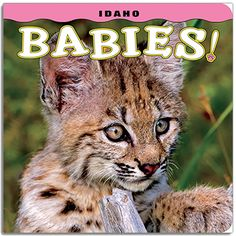 Idaho Babies! Toddlers will meet 13 lovable baby animals, including a frisky black bear, bristly porcupines, a sweet mountain goat kid, a funny badger, a cute bobcat kitten, and a furry little wolf pup. Charming rhymes accompany 13 colorful and engaging photographs by some of the best wildlife photographers in the region. Idaho Babies! is the perfect learning tool for parents to teach their young children about animals in Idaho.
