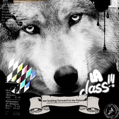 Tableau design plexi Wolf 50x50