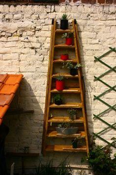 Un vieil escabeau en bois poncé, vernis, fixé au mur, et en guise de pot des boîtes de conserve peintes, et garnies de vivaces.