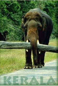 Kerala[1], a state in Southern India is known as a tropical paradise of waving palms and wide sandy beaches. It is a narrow strip of coastal territory that slopes down the Western Ghats in a cascade of lush green vegetation, and reaches to the Arabian sea. http://madrastravels.com/kerala.html