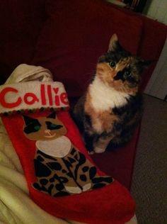 Customized Christmas Socking Pet by BeccaTheCraftmeister on Etsy