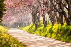 Деревья возле дороги