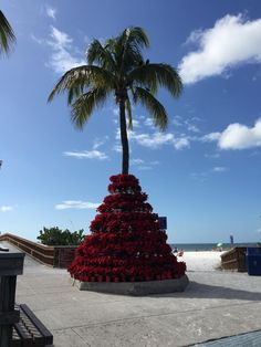 Christmas in Times Square, Fort Myers Beach, Lee County, Florida ~d~4